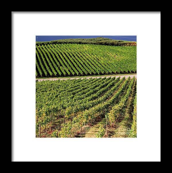 Alcohol Framed Print featuring the photograph In A Vineyard by Indian Summer