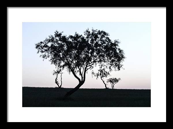 Four Trees Framed Print featuring the photograph Untitled by Gregory Alan