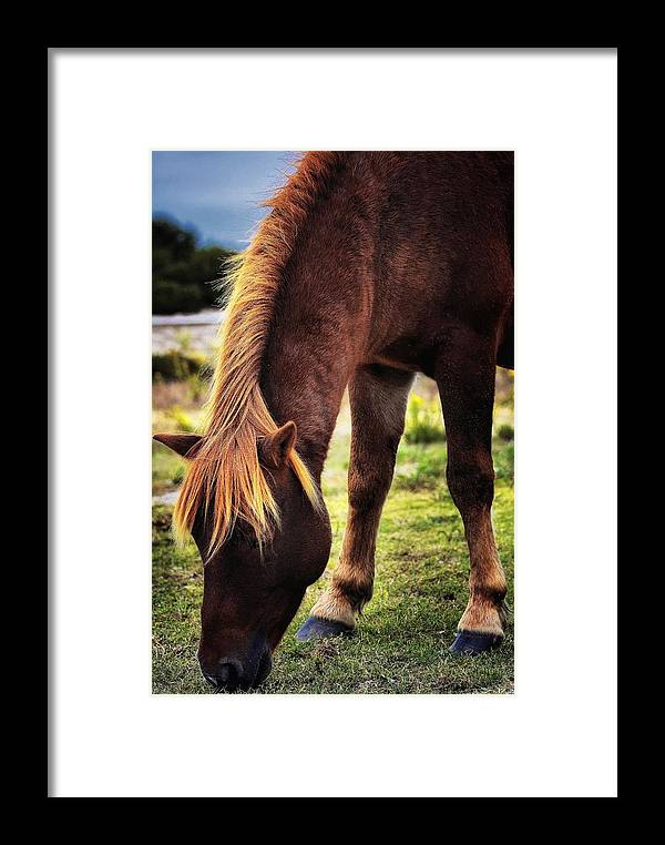Horses Framed Print featuring the photograph 24 Carrot by Robert McCubbin