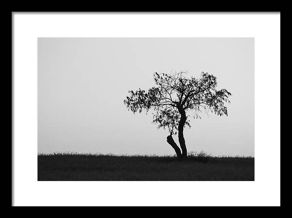 One Tree Framed Print featuring the photograph Untitled by Gregory Alan