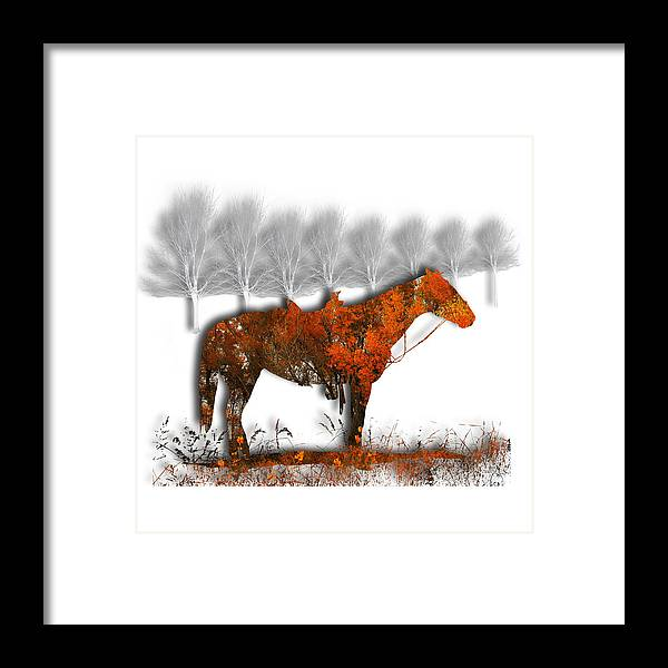 Horse Framed Print featuring the photograph 2610 by Peter Holme III