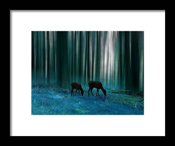 Deer Framed Print featuring the photograph 2737 by Peter Holme III