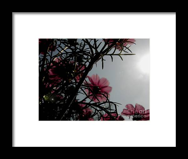 Flowers Framed Print featuring the photograph Love Flowers by Baljit Chadha