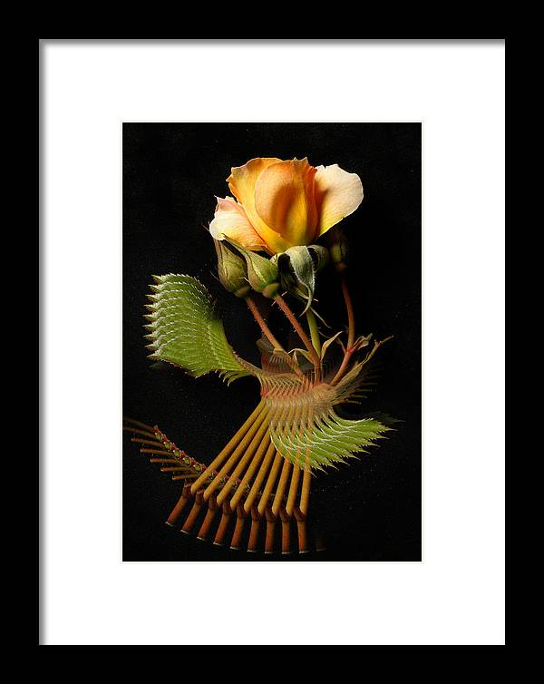 Flora Framed Print featuring the photograph 2948 by Peter Holme III