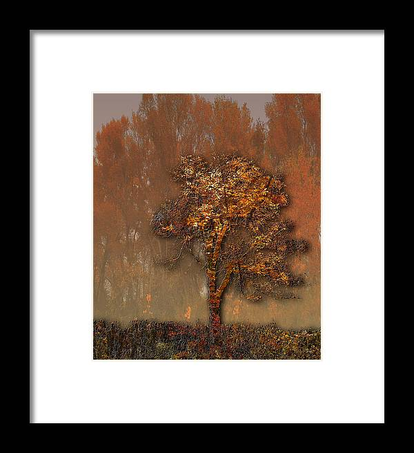 Trees Framed Print featuring the photograph 2950 by Peter Holme III