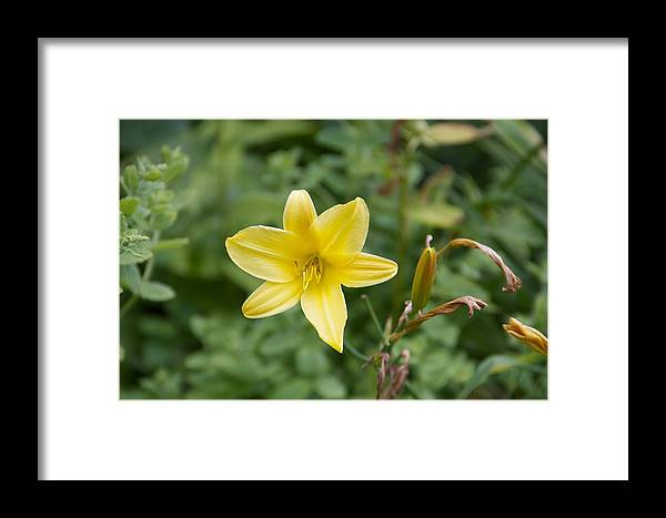 Yellow Framed Print featuring the photograph Beth Chatto Gardens by Sean Foreman