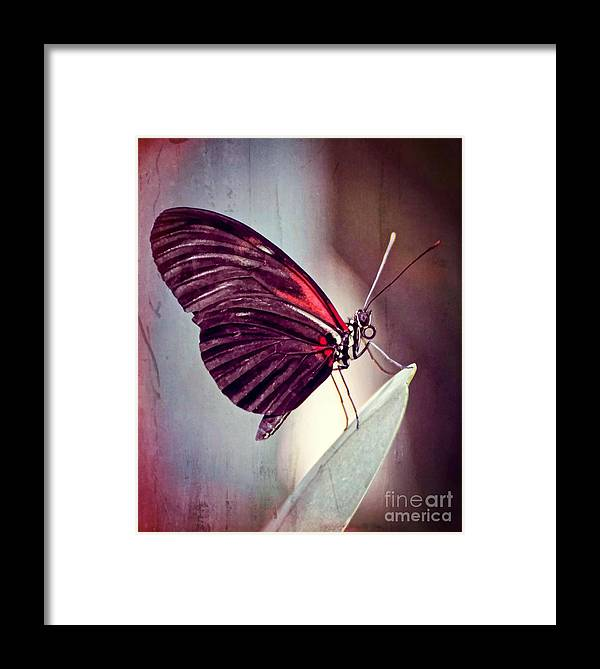 Butterfly Framed Print featuring the photograph Butterfly by Savannah Gibbs