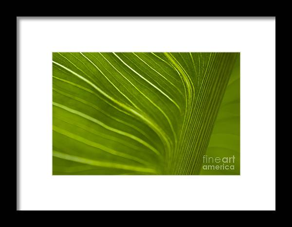 Beauty Framed Print featuring the photograph Calla Lily Stem Close Up by Jim Corwin