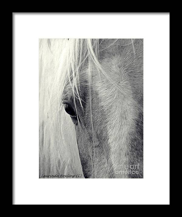 Horse Framed Print featuring the photograph Equine Study by Laurinda Bowling