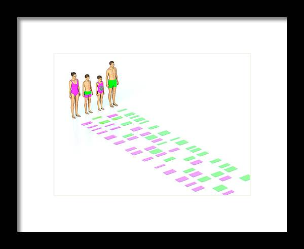 Autoradiogram Framed Print featuring the photograph Genetic Relationships Of A Family by David Parker