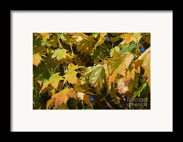 Green Framed Print featuring the photograph Green Tree by ELITE IMAGE photography By Chad McDermott