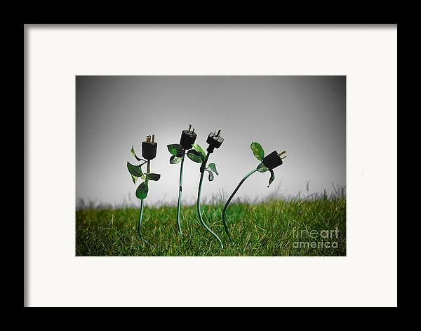 Alternative Energy Framed Print featuring the photograph Growing Green Energy by Amy Cicconi