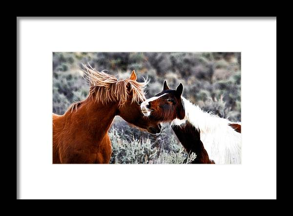 Wild Horses Framed Print featuring the photograph Horse Play by Steve McKinzie