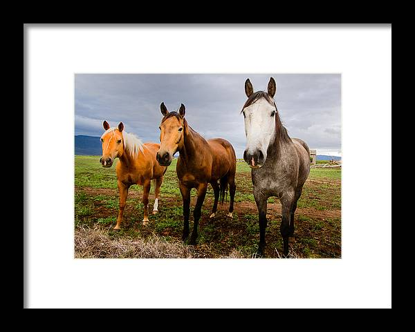Mammal Framed Print featuring the photograph 3 Horses by Jean Noren