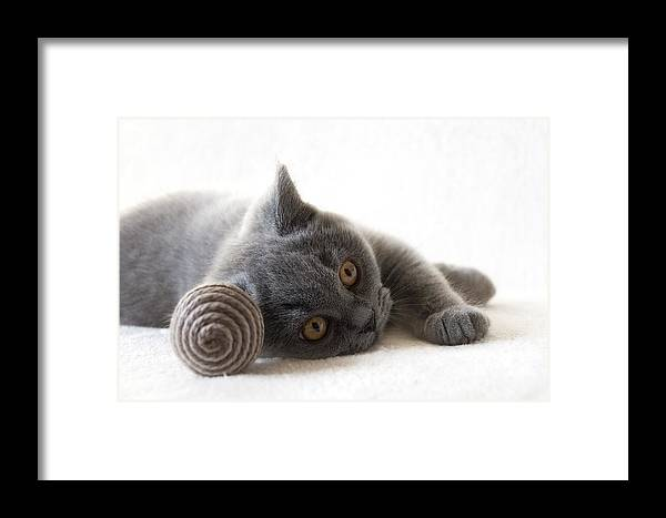 Katze Framed Print featuring the pyrography Little Friend by Steffen Gierok