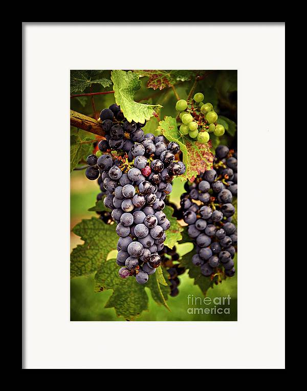 Grape Framed Print featuring the photograph Red Grapes by Elena Elisseeva
