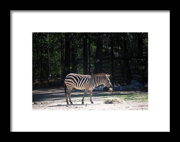 Landscape Framed Print featuring the photograph Riverbanks Zoo Columbia Sc by William Copeland