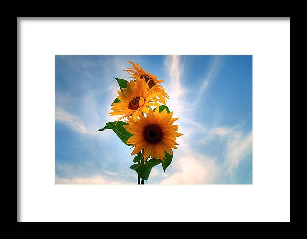 Sommer Framed Print featuring the pyrography Summer by Steffen Gierok