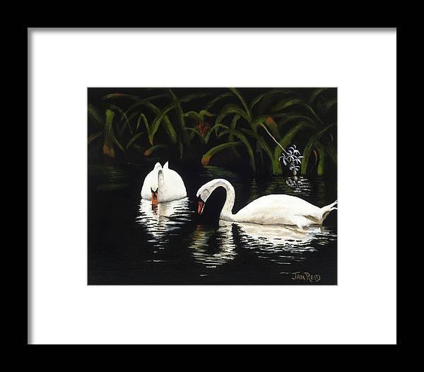 Swan Framed Print featuring the painting Swans II by Jan Reid
