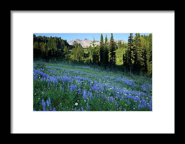 Alpine Framed Print featuring the photograph Wa, Goat Rocks Wilderness, Subalpine by Jamie and Judy Wild