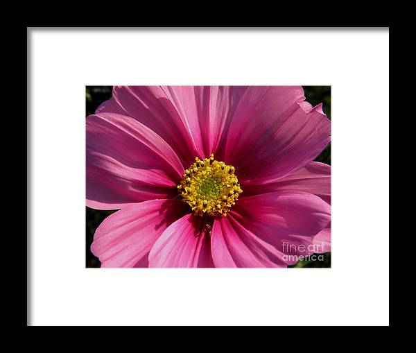 Flowers.love Framed Print featuring the photograph Love Flowers by Baljit Chadha