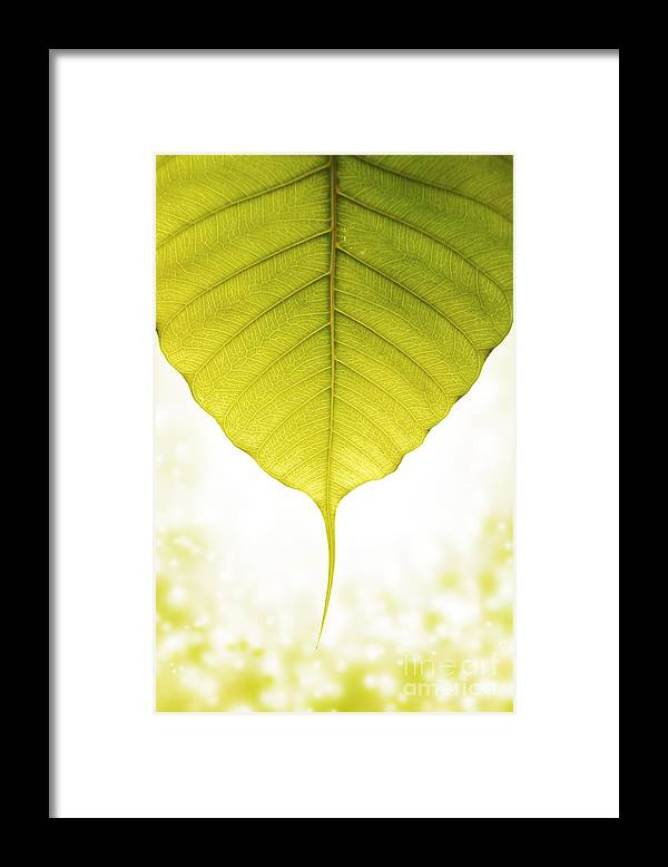 Admiration Framed Print featuring the photograph Pho Or Bodhi by Atiketta Sangasaeng