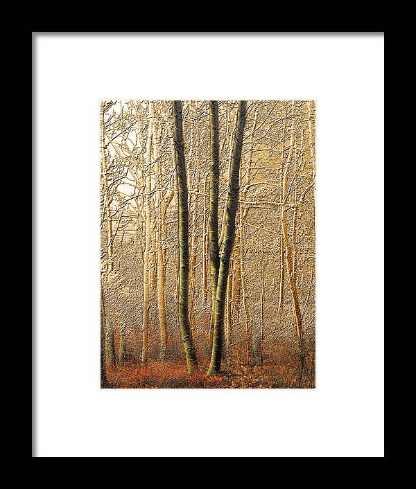 Trees Framed Print featuring the photograph 3150 by Peter Holme III