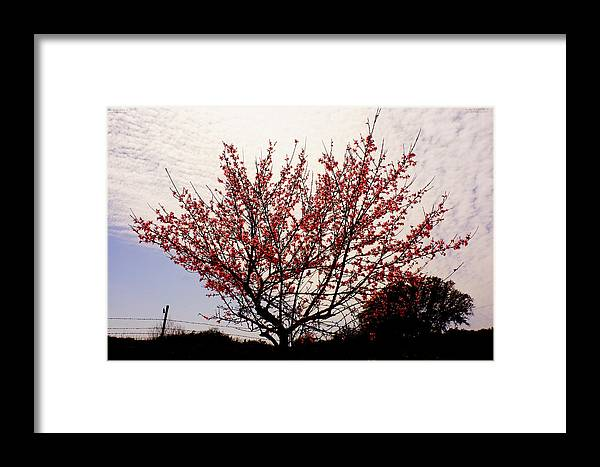 Framed Print featuring the photograph 31512f by Scotty P Tography