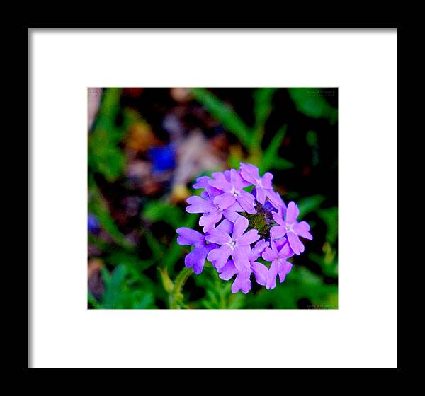 Framed Print featuring the photograph 31712bb by Scotty P Tography
