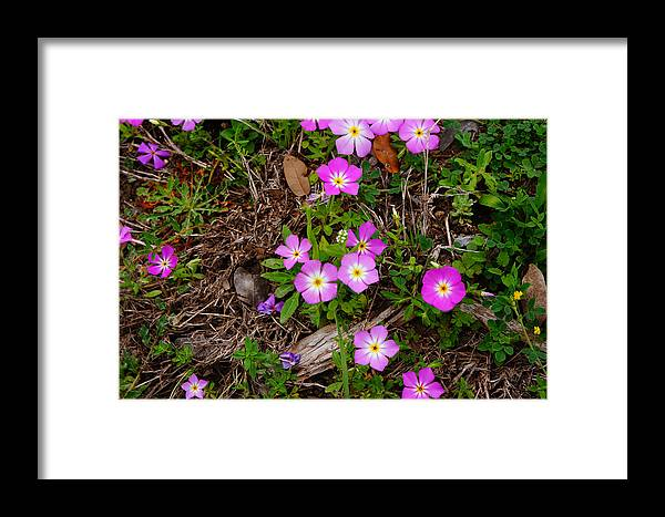 Framed Print featuring the photograph 31712f by Scotty P Tography