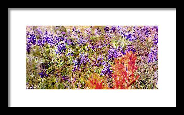 Framed Print featuring the photograph 32313j by Scotty P Tography