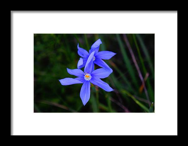 Framed Print featuring the photograph 32412nh by Scotty P Tography