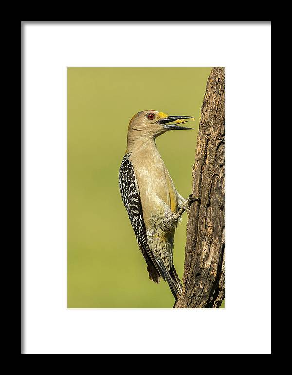 Animal Framed Print featuring the photograph Usa, Texas, Hidalgo County by Jaynes Gallery