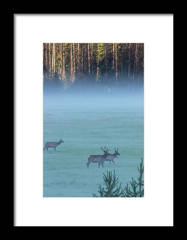 Animal Framed Print featuring the photograph Usa, Colorado, Rocky Mountain National by Jaynes Gallery