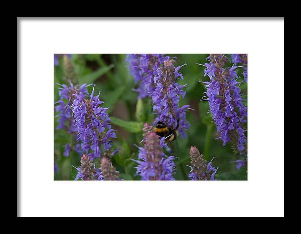 Beth Chatto Framed Print featuring the photograph Beth Chatto Gardens by Sean Foreman