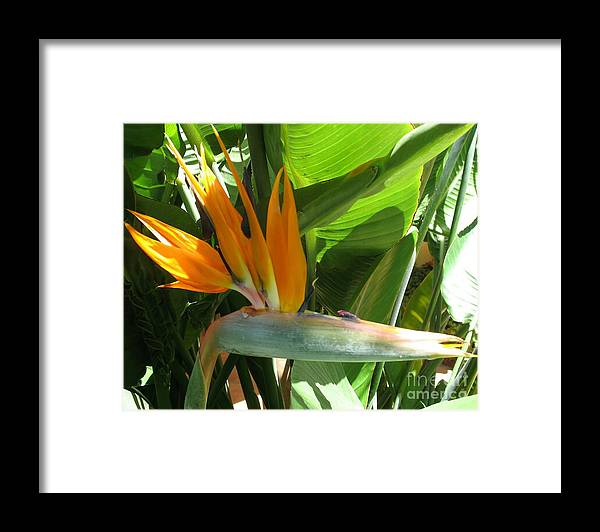 Bird Of Paradise Framed Print featuring the photograph Bird Of Paradise by Christiane Schulze Art And Photography
