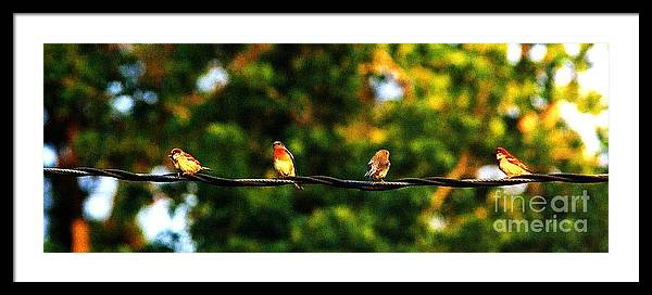 Color Photography Framed Print featuring the photograph 4 Birds by Leon Hollins III