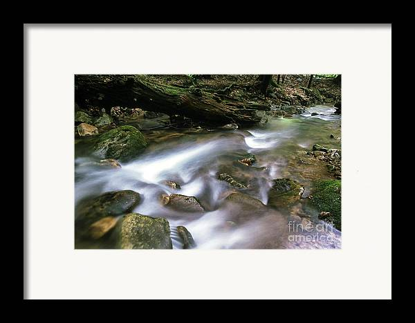 Cranberry Wilderness Framed Print featuring the photograph Cranberry Wilderness by Thomas R Fletcher