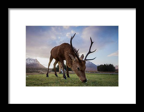 Highland Deer Framed Print featuring the photograph Highland Deer by Keith Thorburn LRPS AFIAP CPAGB