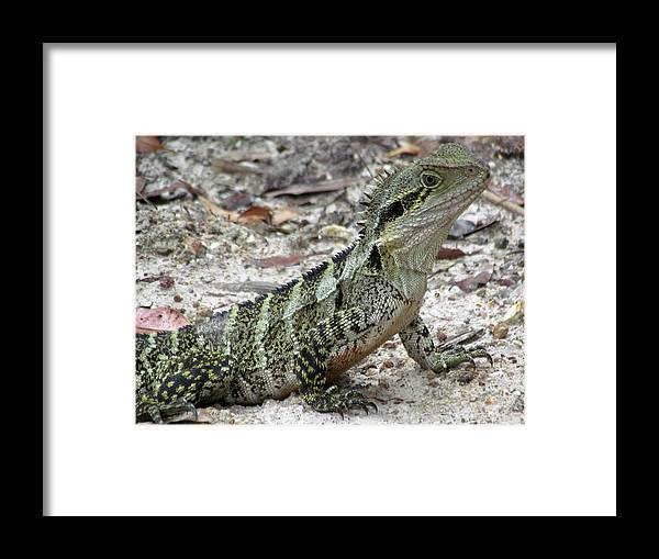 Lizard Framed Print featuring the photograph Lizard by Joyce Woodhouse