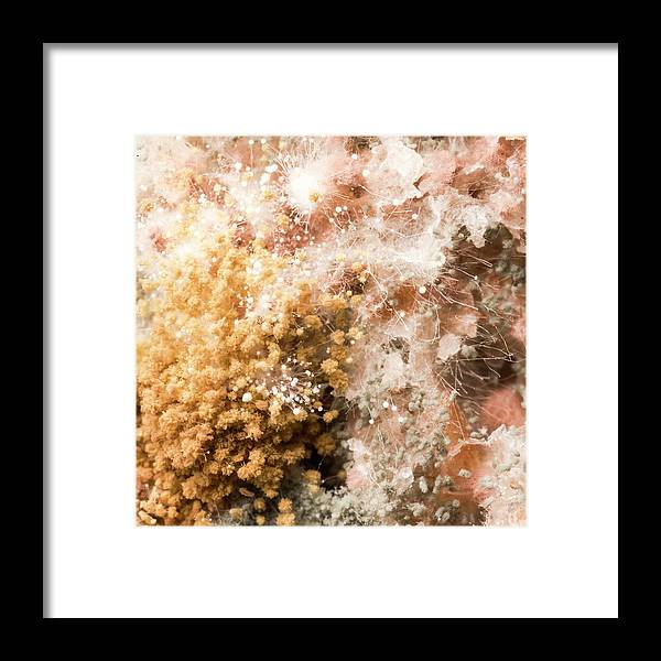 Bread Framed Print featuring the photograph Mould On Bread by Science Photo Library