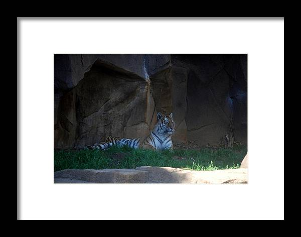 Zoo Framed Print featuring the photograph Riverbanks Zoo Columbia Sc by William Copeland