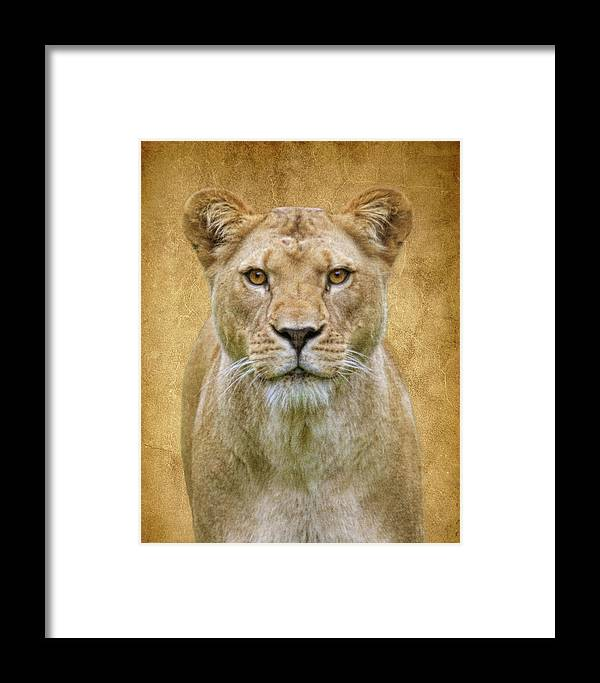 Lion Framed Print featuring the photograph Stare Down by Steve McKinzie