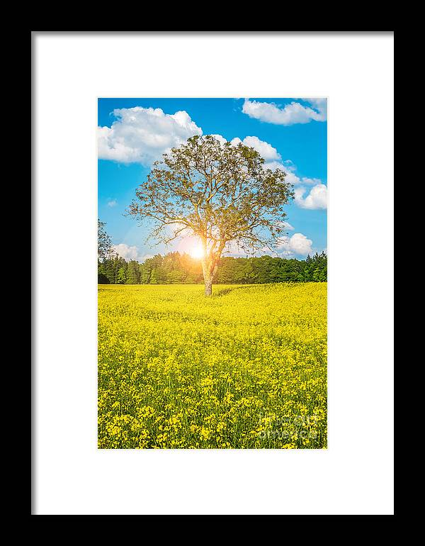 Yellow Framed Print featuring the photograph Yellow Field by Sabino Parente