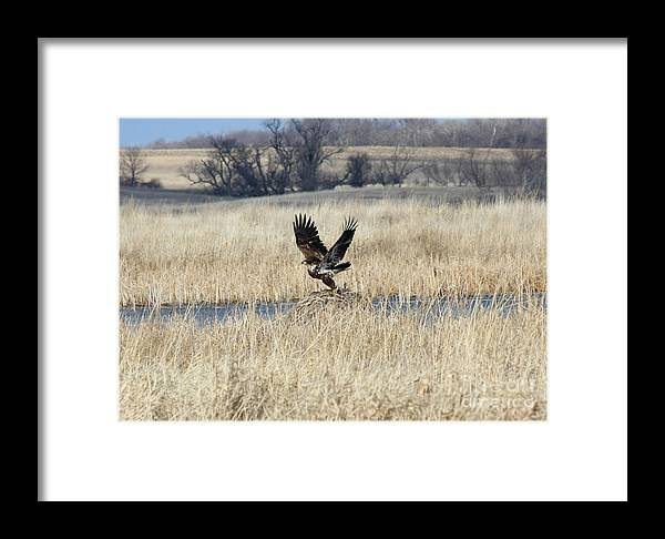 Bald Eagle Framed Print featuring the photograph Bald Eagle by Lori Tordsen