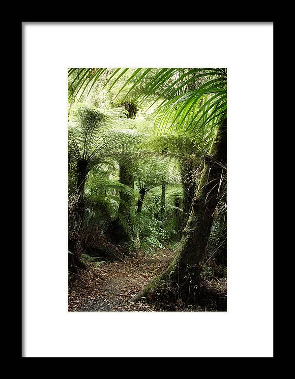 Forest Framed Print featuring the photograph Jungle 2 by Les Cunliffe