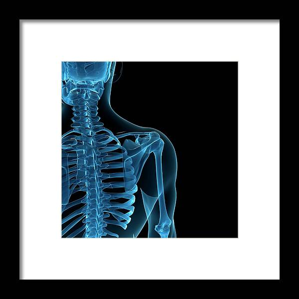 Anatomy Framed Print featuring the digital art Upper Body Bones, Artwork by Sciepro