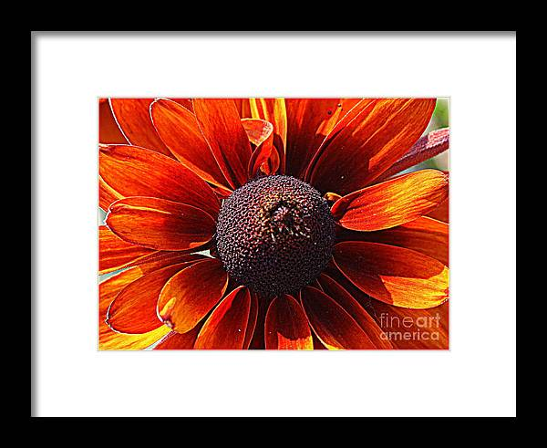 Susans Framed Print featuring the photograph Brown Eyed Susan by Dora Sofia Caputo Photographic Design and Fine Art