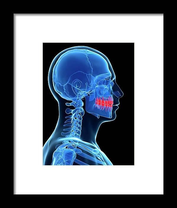 Artwork Framed Print featuring the photograph Human Teeth by Sebastian Kaulitzki