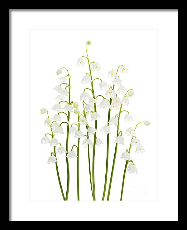 Lily-of-the-valley flowers arrangement by Elena Elisseeva